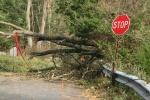 """The Aftermath of Hurricane """"Frankenstorm"""" Sandy"""