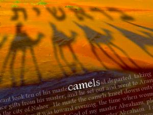 Camels-Genesis